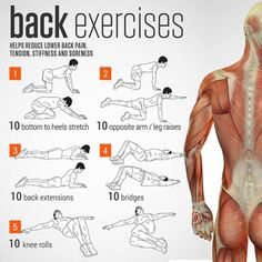 Back Exercises Charts - Health Helps Reduce Lower Back Pain Sore