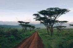 Michele Moss Serengeti & Ngorongoro
