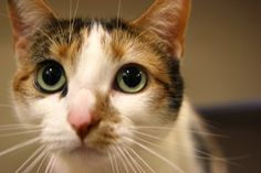 Acura | 33 Cats Who Want To Celebrate Cat Adoption Month With You