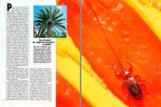Dr. Giuseppe MAZZA Journalist - Scientific photographer > Cycadaceae : le piante che fanno l'uovo