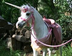 Cutest 5 year old party ever Ponies for parties carriage rides miniature horse rides Southern
