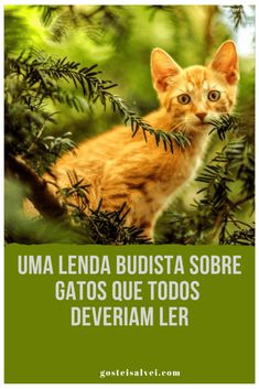 List Of Characters, Neko, Animals And Pets, Bilbao, Cat Lovers, Dog Cat, Pokemon, Cartoon, Decor Ideas
