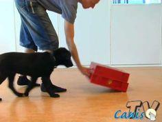 Velkommen til introduksjonskurs i klikkertrening! | Hundetidsskriftet Canis (Norge)