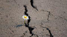 Black Rocks, Dandelion, Flowers, Plants, Environmentalism, Human Rights, Dandelions, Taraxacum Officinale, Royal Icing Flowers