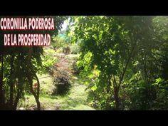 CORONILLA PODEROSA POR LA PROSPERIDAD INTEGRAL - YouTube