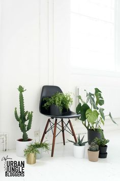 Plant gang for Urban Jungle Bloggers