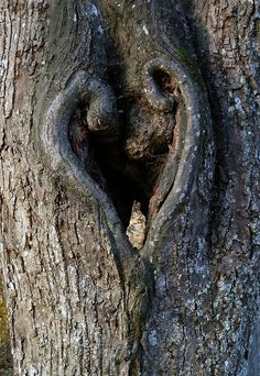 Heart of the Tree photo by Claude@Munich