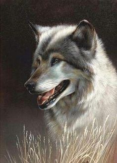 Wolf painting by artist Rebecca Latham, watercolor kK Beautiful Creatures, Animals Beautiful, Vida Animal, Timberwolf, Wolf Painting, Wolf Spirit, Spirit Animal, Wolf Love, Wolf Pictures