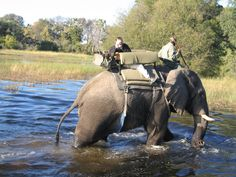 Botswana safari ,Okavango Delta, camp was the elephant rescue centre and orphanage at Abu Camp, where they re-socialise elephants back Into the wild. Elephant World, Elephants Never Forget, Space Gallery, Okavango Delta, Water Sources, Amazing Pics, Big Cats, Good Books, Safari