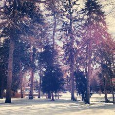 Trees along the pathway near Peckham Hall.