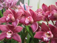 pictures of orchids | orchids are one of the darling flowers of amateur gardeners and ...