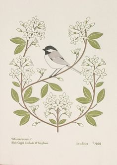 Massachusetts (from birds and blooms of the 50 states)