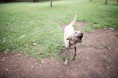 Hoje a Leica veio mostrar para vocês mais um parque da cidade de São Paulo! O Parque Ibirapuera tem uma área onde os pets podem ficar soltos, se divertir e brincar! E no caso da Leica, tomar seu banho de beleza (ou mais conhecido como banho de lama). Vem ver! ♡ Comentários comentários