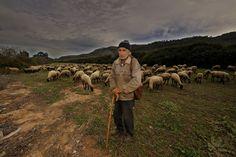 José Mena Alvarez. Fotógrafo : Luís Chorques (Rebaños en la sierra de Enguera)