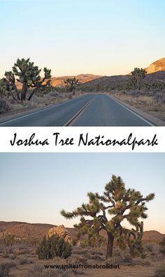 Ausflug in den Joshua Tree Nationalpark #joshuatree #kalifornien #california #nationalpark