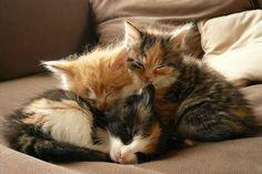 3 little kitties