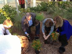 The planting of the Flor500 wildflower garden at the South Regional Library. FLOR500 is a participatory art, nature and history project created by Miami artist Xavier Cortada to commemorate Florida's quincentennial in 2013.