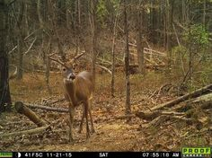 Not seeing any #deer when in the field? This could be the reason why. #hunting #hunt http://www.fieldandstream.com/blogs/mid-south-rut-report/not-seeing-deer-heres-why
