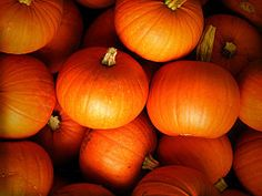 Pumpkin varieties, Squash varieties and Best pumpkin on Pinterest