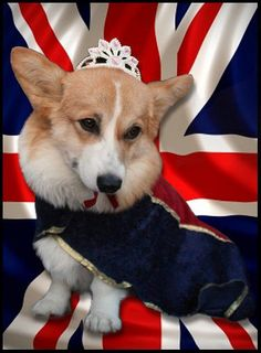 Royal!! ....... all things union jack... One of the best dog breeds EVER- Heather Scott