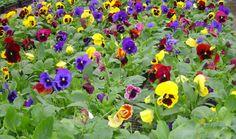 florida flowers - Google Search