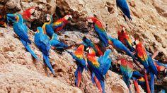 Resultado de imagen de fondo paisaje peru