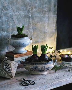 Love the idea of the old soup serving dish as a planter Natural Christmas, Rustic Christmas, White Christmas, Vintage Christmas, Christmas Time, Christmas Ideas, Xmas, Hyacinth Plant, Inside Garden