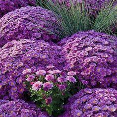 Beautiful Purple Flowers