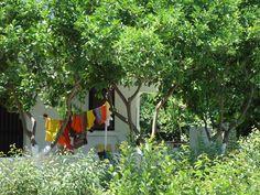 het achteruitzicht van Joy,op limoenbomen