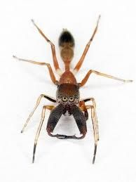 una hormiga muy chute