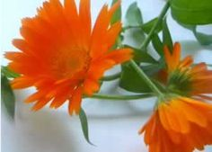 Calendula has been verified the effective for healing wounds and reducing inflammation.  Calendula is a particularly good treatment for cuts, scrapes, bruises, insect bites and minor wounds and is an antifungal.