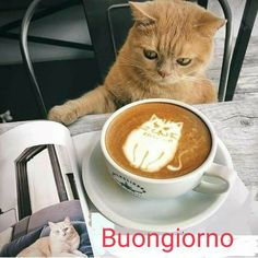 Funny Cat Videos, Funny Cats, I Love Cats, Cool Cats, Kittens Cutest, Cats And Kittens, Morning Cat, Morning Coffee, Cool Cat Trees
