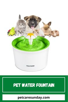 Cats struggle with sufficient levels of hydration, too. This product will fix the issue of drinking water well for pets and you don't have to think about not preparing drinking water for pets while you're busy with the job. This creative fountain inspires your pet to drink more water, with a fun concept keeping her safe and hydrated. Outdoor works also encourage pets to enjoy the sun. #petwaterfountain #catwaterfountain #bestpetsafewaterfountains #catwaterfountainstainlesssteel Cat Water Fountain, Drink More Water, Water Well, Enjoying The Sun, Pet Safe, Drinking Water, Dog Bowls, Dog Food Recipes, Concept