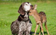Ciervo con un perro