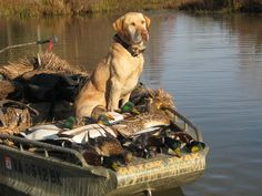 duck hunting | duck hunting graphics and comments