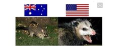 And America thinks we have scarier animals. These two are both possums.