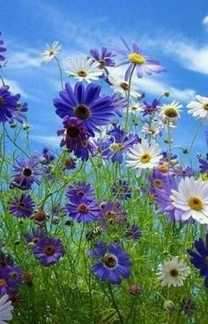 Create A Garden To Remember With This Useful Advice. - Useful Garden Ideas Exotic Flowers, Colorful Flowers, Spring Flowers, Wild Flowers, Beautiful Flowers, Meadow Flowers, Fresh Flowers, Blue Flower Wallpaper, Flower Garden Plans