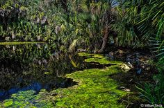 Pond Algae, New Orleans | Flickr - Photo Sharing!