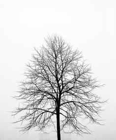 The silhouette of a winter tree.  Absolutely lovely.