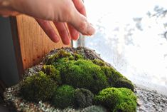 Grow moss indoors