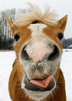 Peter van Nugteren Photography Crazy Horses - Say cheese!