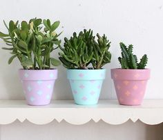 DIY spring cactus cacti thrift succulents dumpster diving jade plant