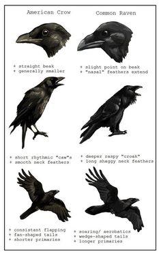 ...get tattoo right...