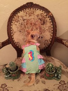 Muñequita's haul shot: her new seahorse romper with the elephant cacti planters.