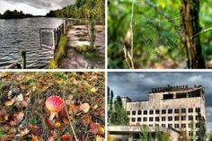 Ανεξήγητα Φαινόμενα...: Δείτε τι συμβαίνει σε ένα δάσος στο Τσερνόμπιλ 28 ...