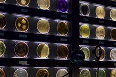 agar plates museum - Google Search Nespresso, Coffee Maker, Kitchen Appliances, Museum, Plates, Agar, Google Search, Coffee Maker Machine, Diy Kitchen Appliances