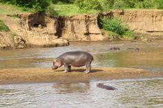 Massai Mara Nationalpark Kenia Afrika