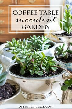 Coffee Table Succulent Garden | Shows how to plant succulents in vintage containers for a lovely coffee table display.