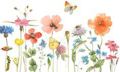 Marjolein Bastin    Wildflowers, Butterflies, & Caterpillar