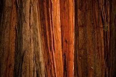 Abstract Nature Patterns-  Sequoia Light